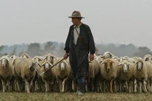 shepherd-sheep-10
